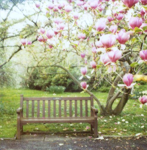 spring peaceConway Ecour, Susannah Conway, Magnolias Benches, Conway E Cours, Beautiful, Mixxed Meditation, Susannah Polaroid, Magnolias Trees, Susannahconway