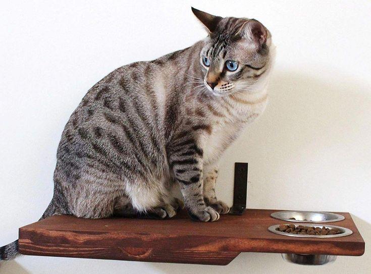 Park Art My WordPress Blog_Allerpet Cat Dander Remover Petsmart