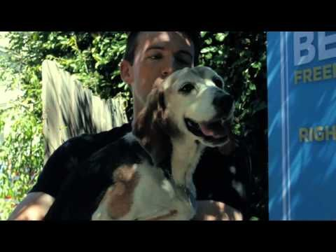 Rescuing The 3 Musketeers! BFP's Korean Senior Beagle Rescue