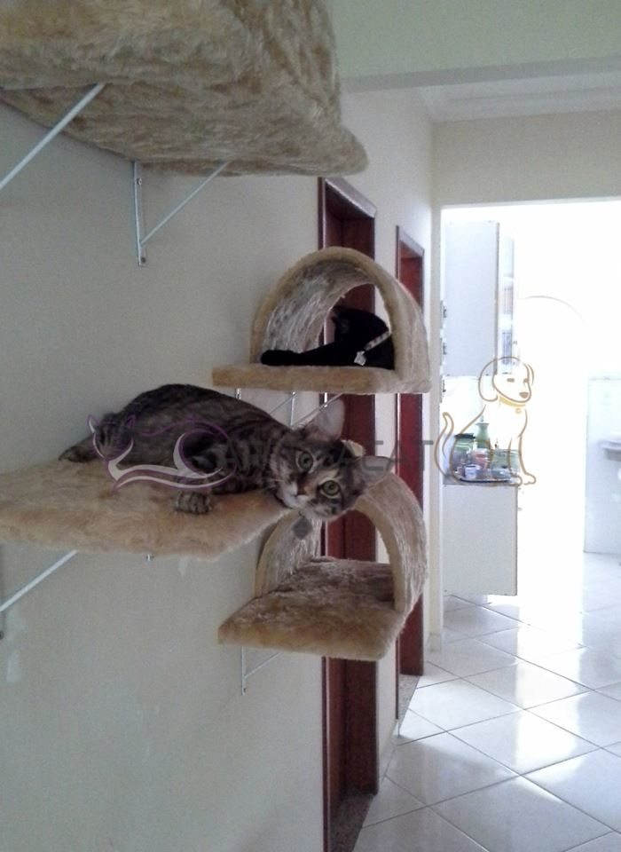 Kit Prateleira Para Gatos - R$ 209,00 no MercadoLivre