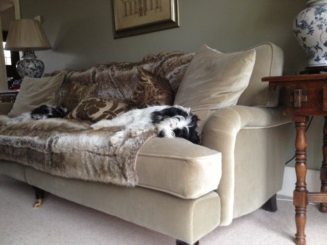 Sian's warm and cosy Bluebell sofa in Warwickshire