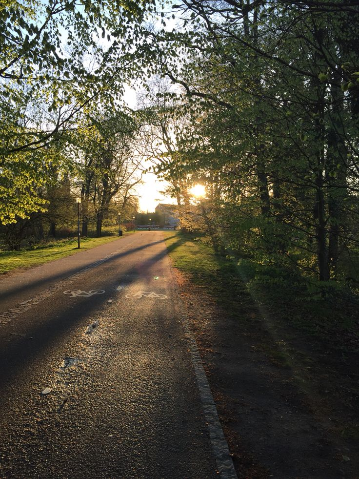 Biking home in the sunset #Odense