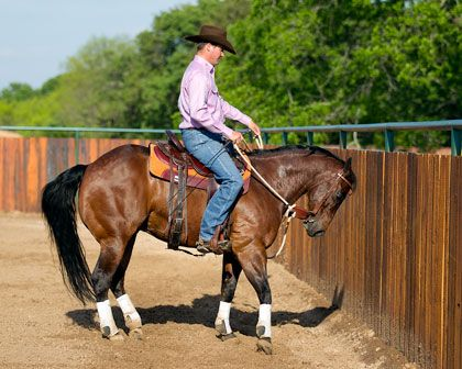 Learn at Home Horse Training DVD Kits | Downunder