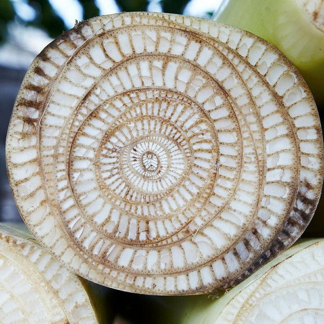 Banana trunk cross-section by detengase, via Flickr