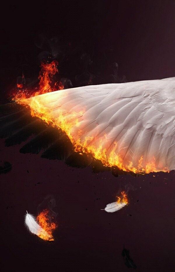 фотографировали горящее крыло обложка