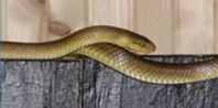 how to get rid of water snakes