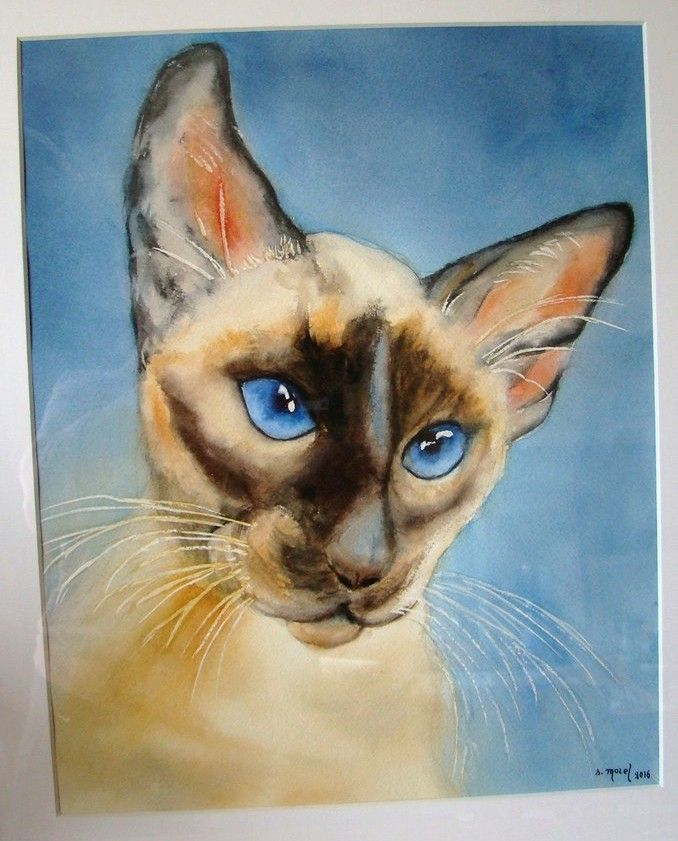 Chat siamois AQUARELLE Watercolor Cat