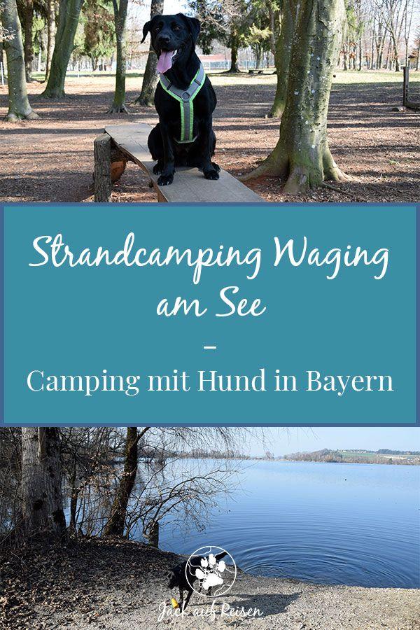 Strandcamping Waging Am See Camping Mit Hund In Bayern Jack Auf Reisen Strand Camping Camping Campingplatz Mit Hund