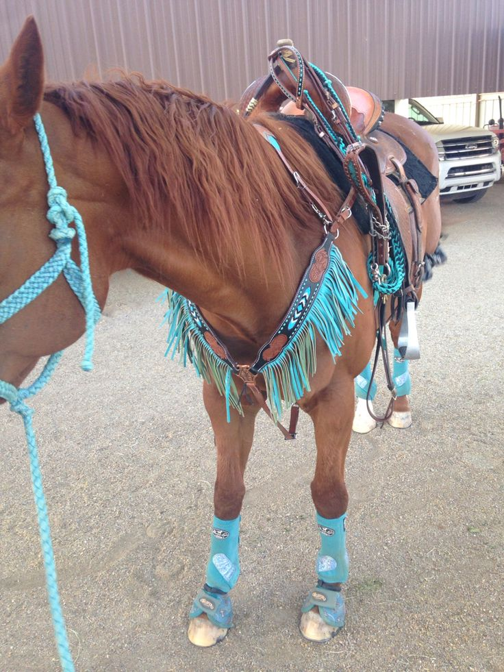 Horses & Tack... amazing tack saddle:flex tree pad: Won pad original splint boots: Professional choice glitter turquoise splint boots bell boots: Weaver turquoise cross bell boots tack set/head stall and breast collar: Showman hand beaded find