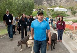 Cesar Millan walking with a group of people and dogs