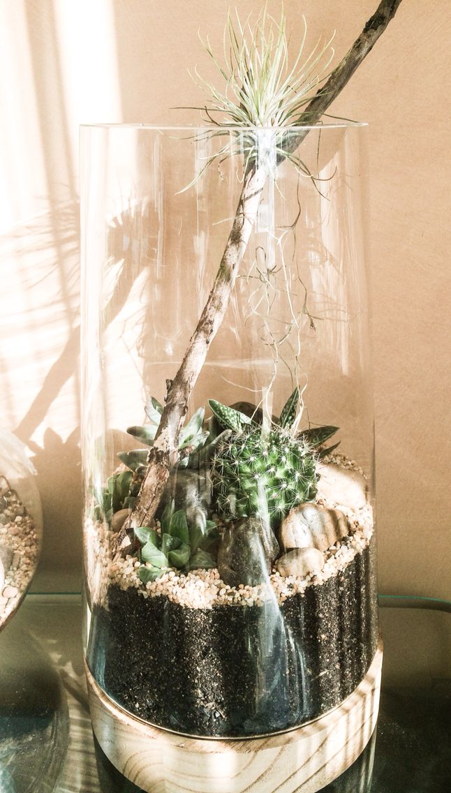 Succulents, cactus & an Air Plant