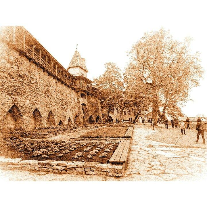 Danish King's Garden. #travel #medieval #art #Tallinn #Estonia