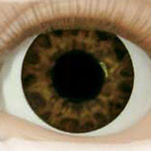 Acrylic Eyes : Real Brand Eyes - Tiger Eye Brown