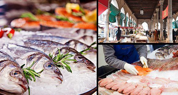 Expo Veneto: Fish - Feeding - Events