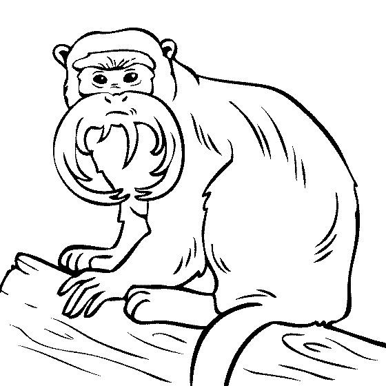 scary monkey coloring pages | 373 best images about jungle ideas on Pinterest