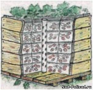 Выращивание картофеля в коробах или ящиках - Выращивание картофеля - Картофель - Каталог статей - Сад, дача, огород