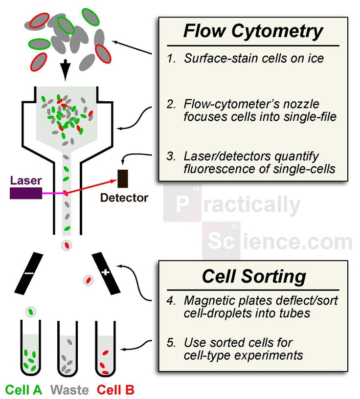 This shows the general scheme of flow cytometry