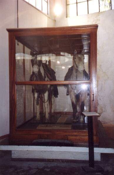 Gato e Mancha al museo Udaundo di Lujan
