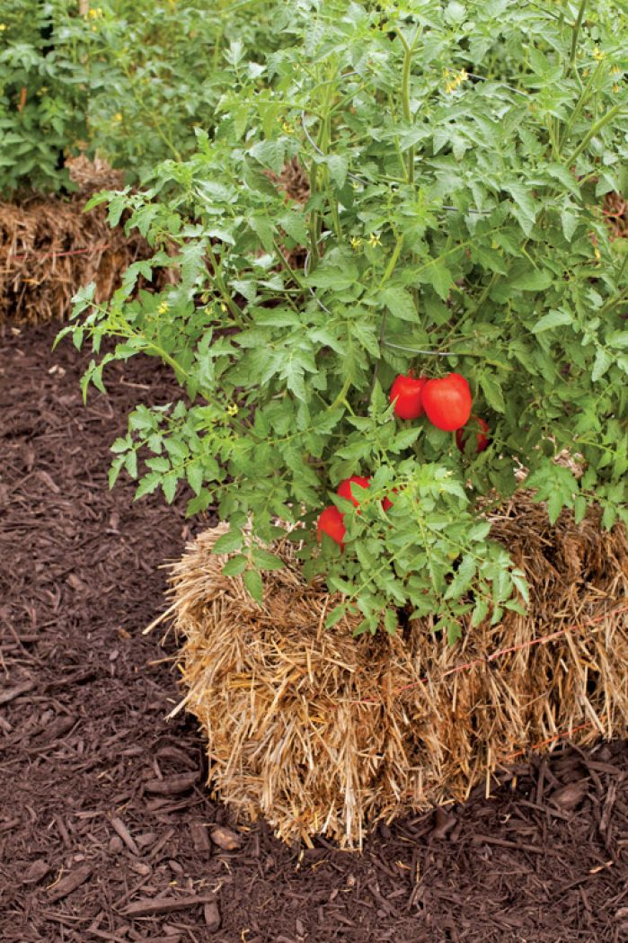 Summer 39 S Hottest Trend Gardening In Straw Bales Household Ideas Pinterest Summer
