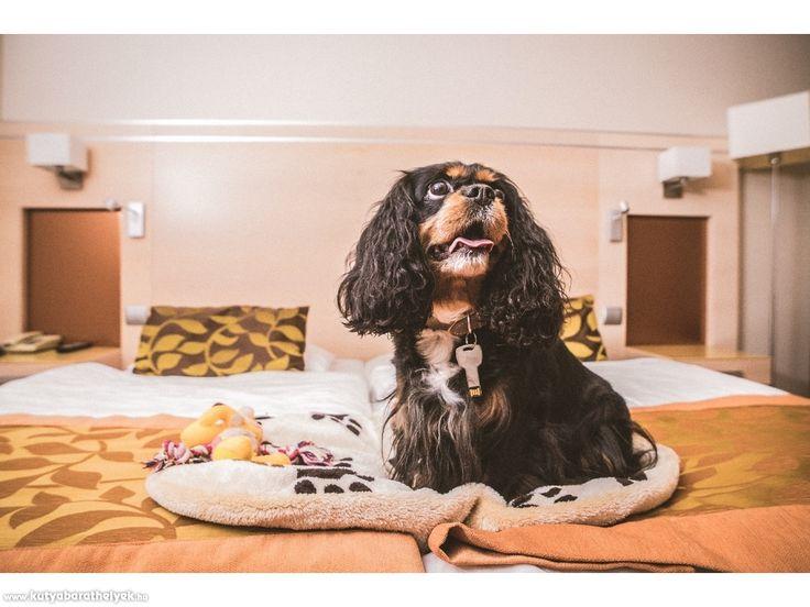 A kutyabarát Hotel Sopron  #kutya #utazáskutyával #kutyabarát #hotel #Sopron #Hungary #kutyabaráthelyek