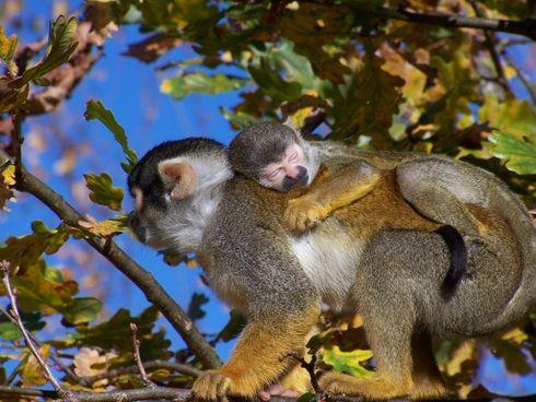 Baby boom à la Vallée des Singes