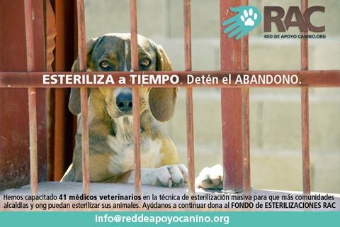 Colabora por el bienestar de los animales en estado de abandono por tan solo Bs. 25 a Red de Apoyo Canino http://www.pescatuoferta.com/oferta/detalle/colabora-por-el-bienestar-de-los-animales-en-estado-de-abandono-por-tan-solo-bs-25-a-red-de-apoyo-canino.html