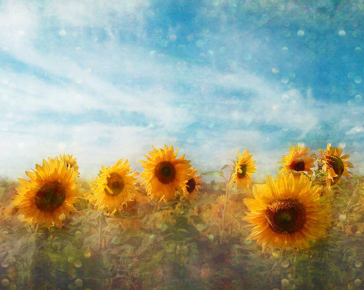 Bohemian Sunflower Flower Photograph Art Print France
