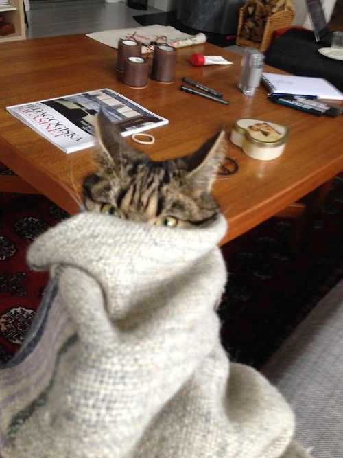 Uh-oh. Someone is not pleased to be a blanket burrito this morning...