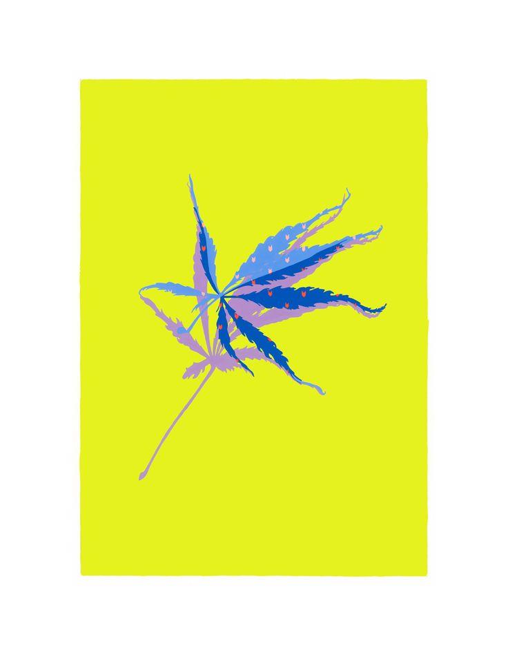 Yellow Maple - Laura Walker | www.laurawalker.co.nz