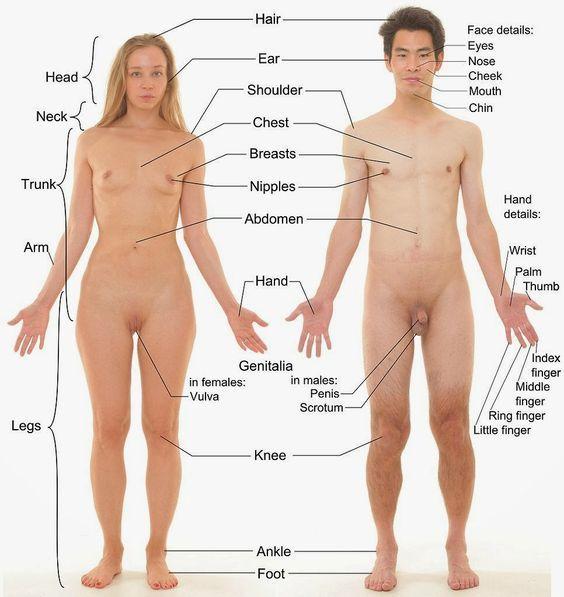 Человеческое тело мужское и женское отличается не только внешне, но и внутренне на уровне энергии, чакр и каналов