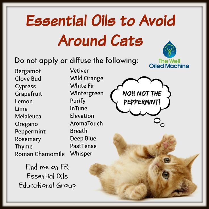 Can You Diffuse Essential Oils Around Cats