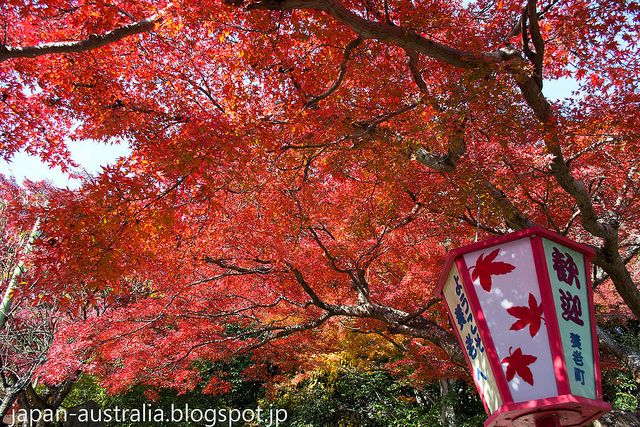 Yoro Park (養老公園) is regarded as one of the best spots in Gifu Prefecture for the beautiful Autumn Leaves. Yoro lies at the western edge of Gifu Prefecture close to Mie Prefecture. It is beautifully situated between the Yoro Mountains and the Ibigawa River..