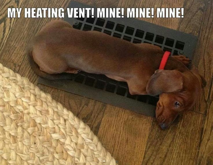Wieners are good at heating themselves (or cooling themselves!)