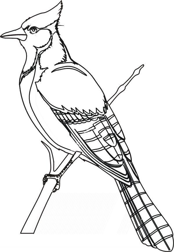 Bird coloring pages blue jay | Bird coloring pages, Bird ...