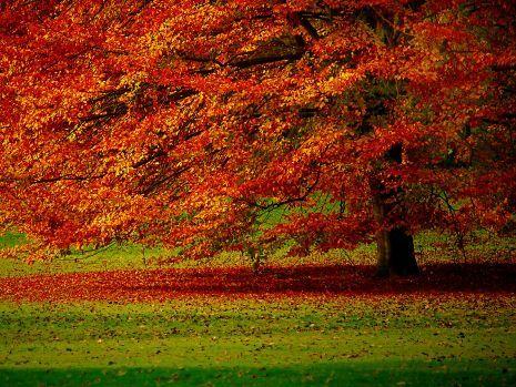 Autumn Garden, Belgium ( Sonbahar bahçesi, Belçika )
