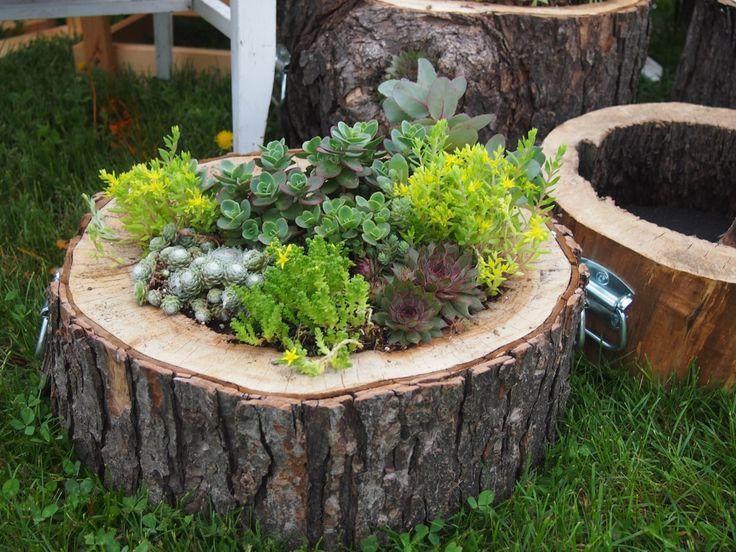 33 best hollow log gardening images on pinterest for Wooden plant pot ideas