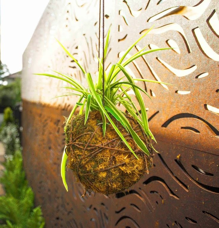 Kokedama ball in front of Outdeco screens