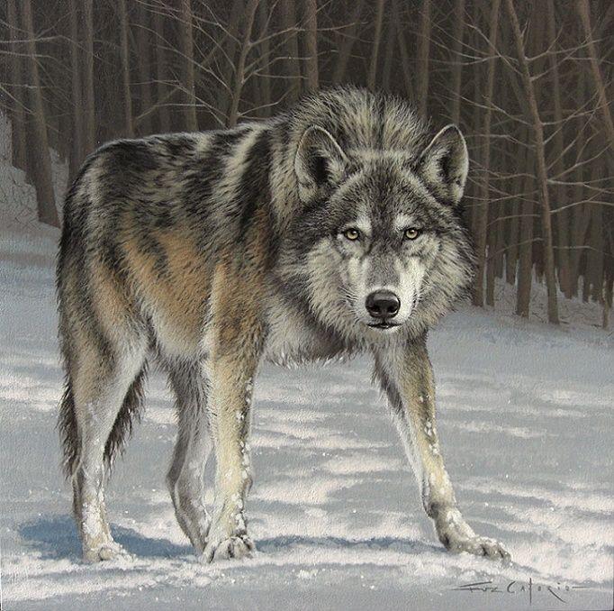 Картинка настоящий мужчина как волк
