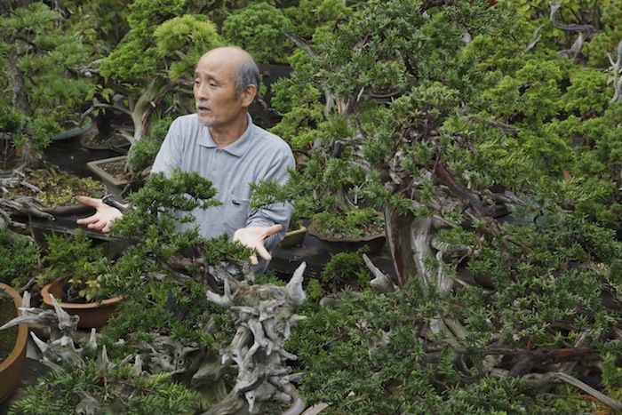 "Takeo Kawabe: ""Only part of a long life of a tree can I support. My work is incomplete at all times."""