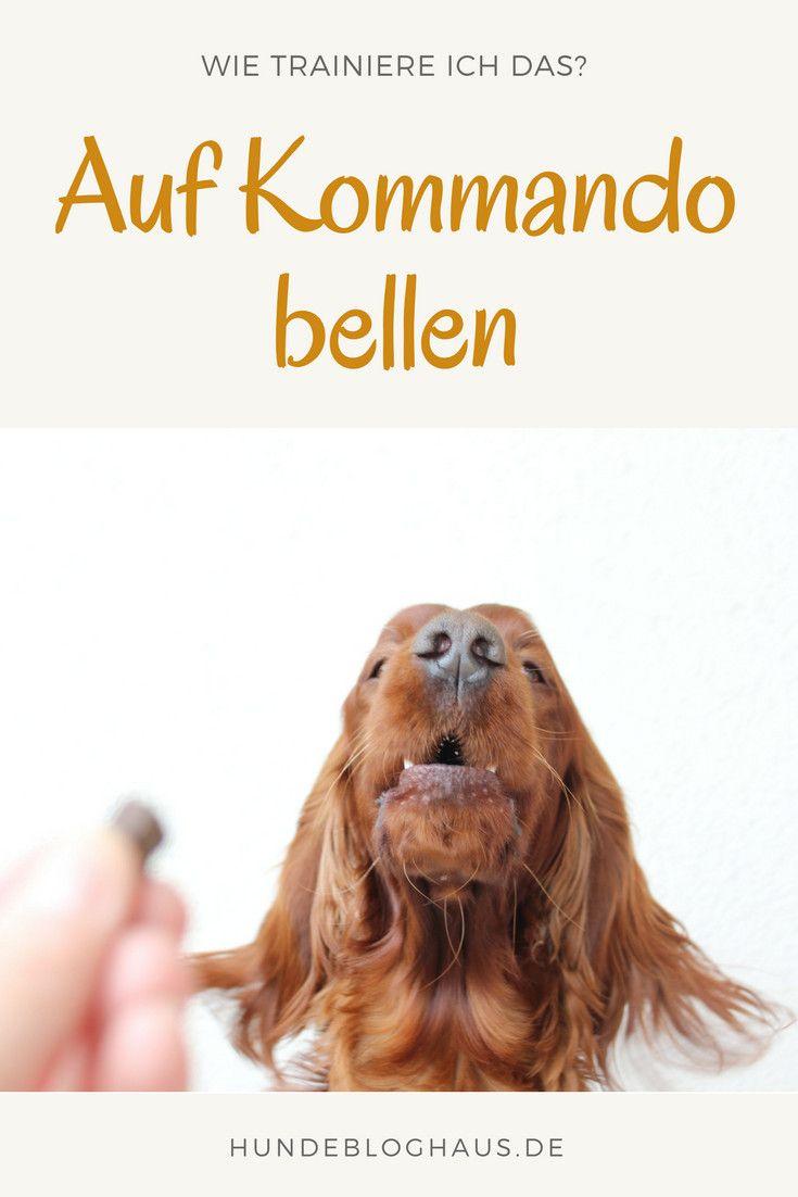 Hund Bellen So funktioniert der Trickaufbau...
