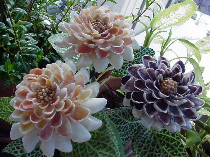 3 long stem Seashell Shell Flowers   COQUINA  art decor