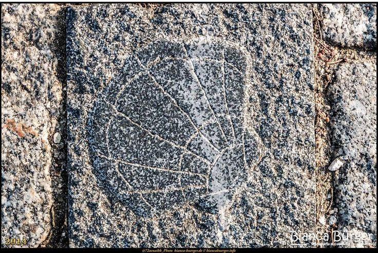Fürstenwalde (Brandenburg) - Die Muschel als Pflasterstein   #Fürstenwalde #Brandenburg #Deutschland #Germany #biancabuergerphotography #igersgermany #IG_Deutschland #ig_germany #shootcamp #shootcamp_ig #pickmotion #diewocheaufinstagram #visitbrandenburg #visit_brandenburg #AOV5k #canon #canondeutschland #EOS70D #Muschel #shell #art #Kunst #Pflasterstein #pavingstone