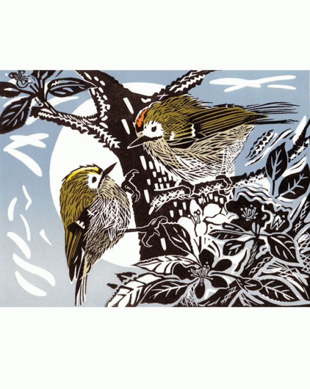 Goldcrests Print by Pam Grimmond
