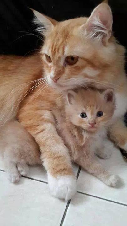 Un chaton avect sa belle maman
