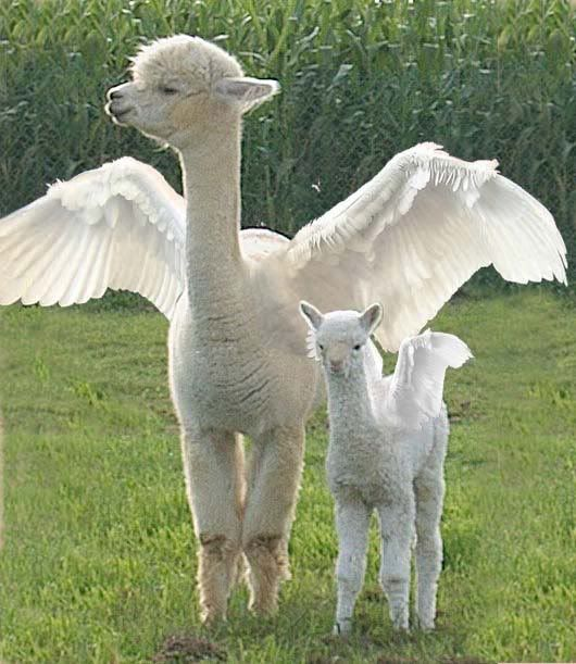 White dragon llamas. Doesn't get any better than this.