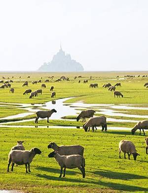 Urlaub in der Normandie ist herrlich: die weiten Strände, die Gärten schön wie im Paradies - und die Delikatessen, von denen man einfach nicht genug ...