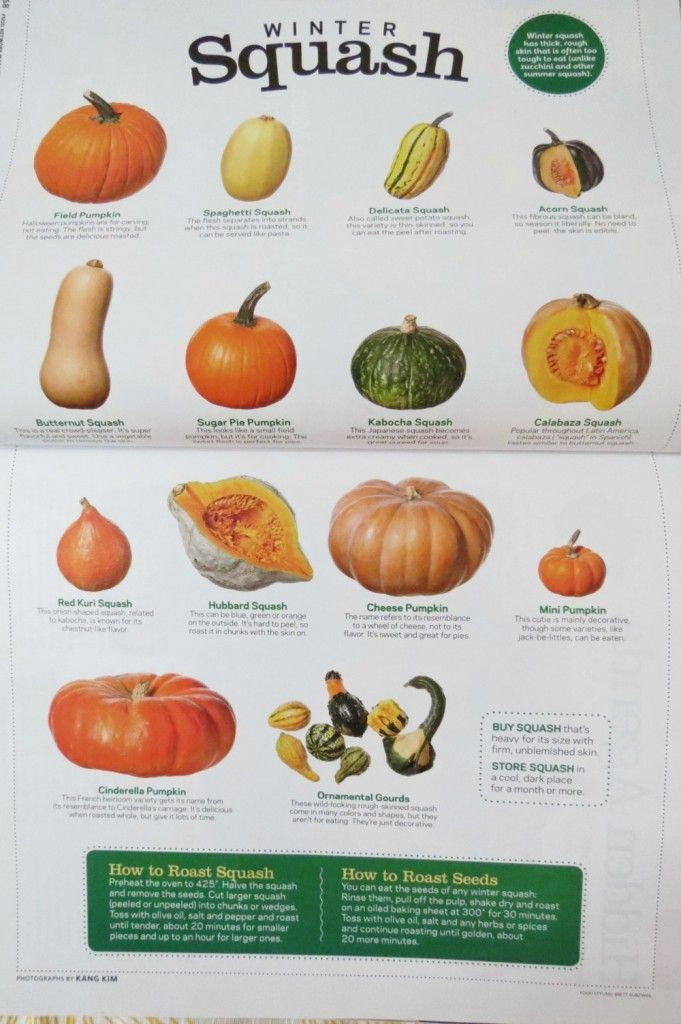 kinds of squash and how to cook them