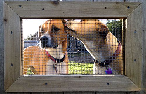 52 Best Images About Dog Fence Windows On Pinterest For