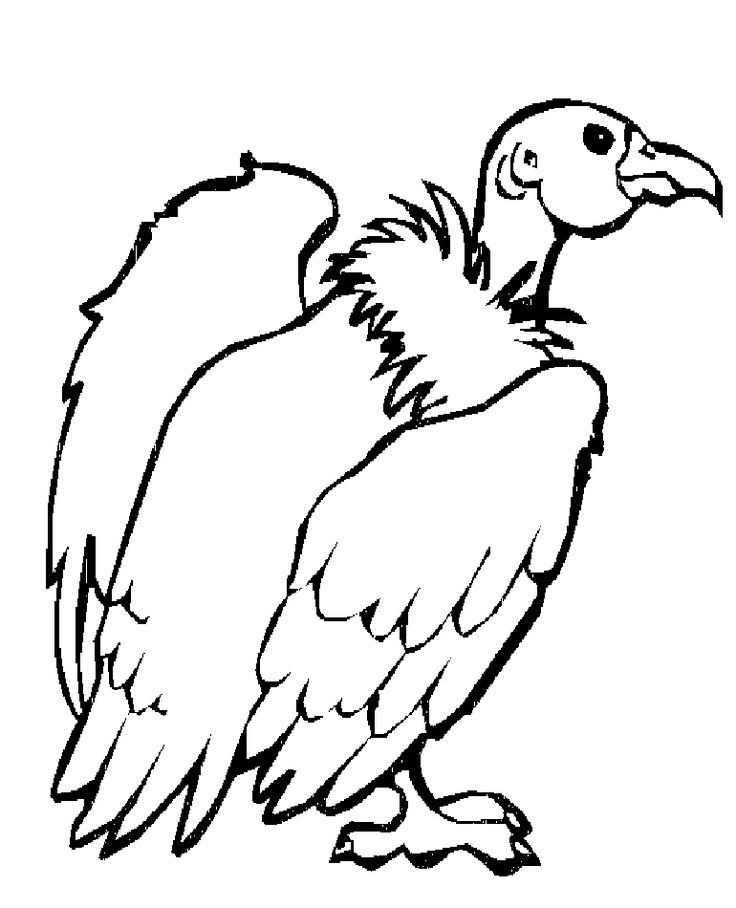 vulture coloring pages Coloring Page