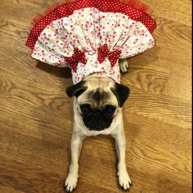 Blazers Dog Dress Cheer Dog Custom Cheerleader Dress Football Sports Costume For Small Toy Breed Dogs Sample Sale Dog Clothes Small Dog Dresses Puppy Clothes